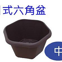 *滿1200免運*【BI012】日式風格 造型淺盆/日式六角盆-中【園丁花圃】