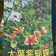 喬木 ** 大葉紫蝴蝶 ** 8吋盆/高100cm/全年開花【花花世界玫瑰園】OvO