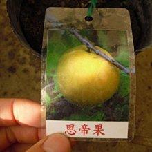 ╭☆東霖園藝☆╮稀有果樹(思帝果)Eugenia.stipitata ---熱帶果樹
