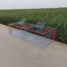 免運加密鴿子養殖籠兔籠雞籠子家用鵪鶉籠鍍鋅鐵絲籠運輸籠大號籠