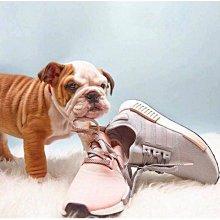 Adidas NMD RUNNER 粉灰 灰粉 女神 黑粉 3M 反光 R1 女鞋 櫻花粉 淺灰 BY3059