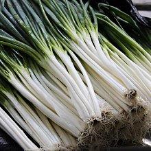 【蔬菜種子S296】黑葉種三星蔥 ~~蔥白稍粗,不易抽苔,風味濃郁,產量高穩。