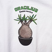 ✞ASENSERI✞ GREEN PRICKLE GRACILIUS TEE 象牙宮圖像短 TEE