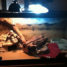 乾燥沙漠型爬蟲專用 紫外線UL燈 10.0 UVB 26w 鬆獅蜥 王者蜥 豹龜 蘇卡達 沒曬太陽或日曬不足環境適用