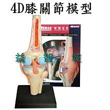 益智城《膝關節模型/關節模型/骨骼模型/骨頭模型//DIY模型/教學模型/科學教具/4D Master 》4D膝關節模型