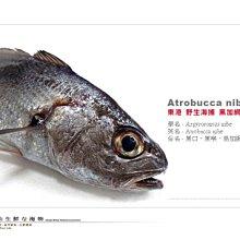 【水汕海物】南臺灣 頂尖高檔魚種 黑加網、黑喉,體型略有大小差異 歡迎洽詢。『實體店面、品質保證』