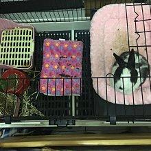 100cm 複式雙層 抽屜式 兔籠