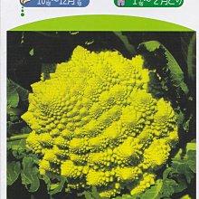【蔬菜種子S175】佛頭花椰菜~~外觀非常特殊的花椰菜品種!