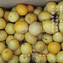 珍柿果園-無農葯無化肥四季檸檬,無毒栽種,在欉採收,產地直送,可超商取貨付款