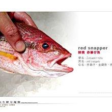 【水汕海物】 赤筆魚(縱帶笛鯛) 台南安平海捕 鮮美滋味。數量有限,下標前請先詢問『門市熱銷、品質保證』