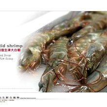 【水汕海物】特價~生凍大白蝦 加勒比海 超值平價美食 。『門市熱銷、品質保證』