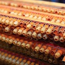 《明豐養蜂場》500克蜂王乳下單處.每日手工採收超新鮮.農糧署檢測合格 外銷日本高品質.另售蜂蜜.花粉.蜂蠟.龍眼蜜