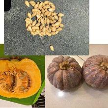 【n0900台灣最便宜】2021 有西洋型栗子南瓜鮮甜綿密的風味 兼具中國南瓜好種及西洋南瓜好吃特色南瓜種子每包10顆$