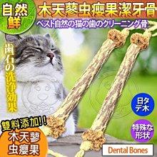 【🐱🐶培菓寵物48H出貨🐰🐹】自然鮮系列》木天蓼虫癭果潔牙骨貓玩具NF-004 特價79元