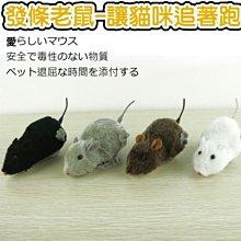 【🐱🐶培菓寵物48H出貨🐰🐹】貓咪追著跑!!發條老鼠造型玩具顏色隨機 特價69元