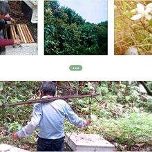 小日蜂光-蜂王乳植物膠囊(多件優惠中)-鮮採手工蜂王乳-各式口味蜂王乳(小農蜂王乳膠囊、蜂膠-蜂蜜、龍眼蜜專賣)