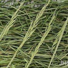 JHS((金和勝 小農))無毒有機 新鮮現割 鮮綠乾草 燕麥草 250g裝 0610