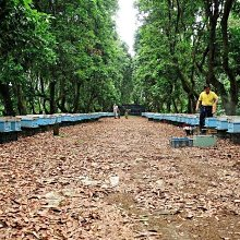 《明豐養蜂場》350克賣場  手工現採新鮮蜂王乳.農糧署檢測合格.外銷日本高品質.蜂蜜花粉