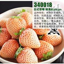 草莓苗  水蜜桃草莓 白草莓 粉紅草莓 桃薰品種