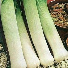 【蔬菜種子S058】丹麥洋蒜~~風味特殊 ,當然要吃看看和本土的大蒜風味有何不同。