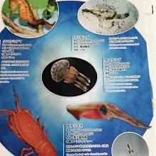 墊板 5沖繩 海洋館 紙硬墊板 美麗魚世界 水族館正反2面 墊板文具書寫便利用品