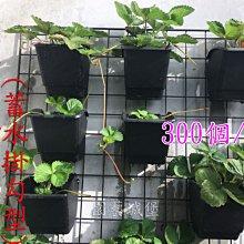 【園藝城堡】花牆單掛盆(植生牆)300個/箱  蓄水掛勾型
