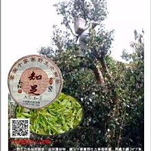 吻潤知足2017年千家寨野生普洱茶250公克限量800餅分享