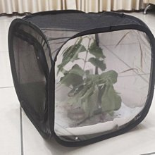 [台灣賣家]現貨黑色可折疊昆蟲飼養籠🐛負趨光性昆蟲飼養籠🐛竹節蟲飼養籠🐛全黑防蟲飼養籠