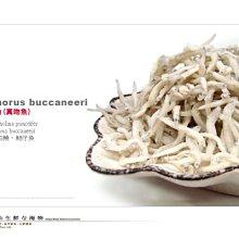 【水汕海物】正魩魚 野生。95折優惠中 !『門市熱銷、品質保證』