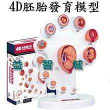 益智城《胚胎模型/人體器官模型/DIY模型/教學模型/模型教具/胎兒模型/教具/4D Master 》4D胚胎發育模型