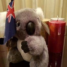 澳洲製原裝8(20cm)無尾熊布偶/照片為商品實物