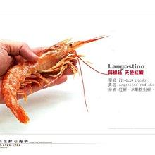 【水汕海物】 特價~搶~阿根廷 天使紅蝦1/2規格~店長推薦~生食級刺身用。『門市熱銷、品質保證』
