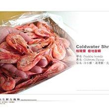 【水汕海物】 2kg頭卵甜蝦 大規格大尺寸70/90 女神大廠 網路首賣  。『實體店面、品質保證』