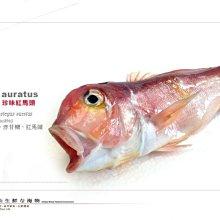 【水汕海物】珍味大紅馬頭魚 北台灣外海 圍網撈捕 。95折優惠中 !『門市熱銷、品質保證』