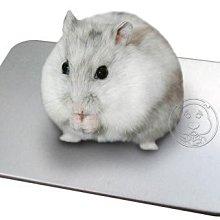 【🐱🐶培菓寵物48H出貨🐰🐹】《小老鼠/迷您兔》涼夏散熱加厚涼鋁墊 特價79元