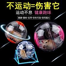 倉鼠玩具 寵物玩具倉鼠跑輪跑球金絲熊水晶滾球支架滾運動球透明玩具用品外帶包