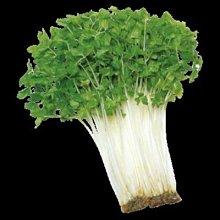 【大包裝蔬菜種子L155】白莖山芹菜,全年皆可種植,日本關西名產!