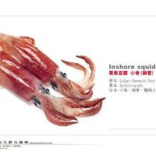 【水汕海物】南方澳鮮凍小卷(鎖管)來自寶島東北角  。優惠活動中~95折 !『實體店面、品質保證』