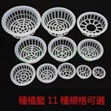 【定植籃-PP-5號-20*7.5cm-15個/組】內徑17*底徑14cm固根器 水培植物用根莖固定-5101011