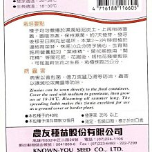 小百日菊 橘色【花卉種子】農友牌 花卉小包裝種子 約40粒/包