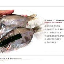 【水汕海物】菊島肉鯽魚 黑潮(肉魚)最肥美 。優惠活動中~95折 !『門市熱銷、品質保證』