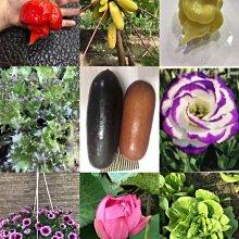 ↖蠍媽辣椒園 (種子)  各種專業種子 特價 ↗標題