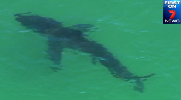 shark attack byron bay - photo #15
