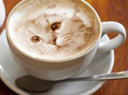 When coffee and cats collide