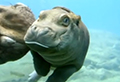 WATCH: Baby Hippo just wants to have fun