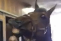 Horse blows out birthday candles