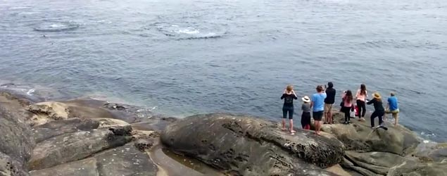 Tourists get amazing sea life surprise (Rumble)