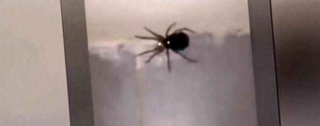 Spider explodes into glowing spider babies (7News)