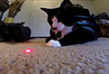 WATCH: Cats vs lasers