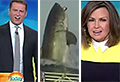 VIDEO: News anchors can't believe this shark's size